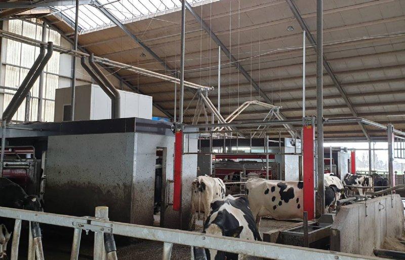 Een kassaopstelling is vooral in bestaande stallen een opkomende variant.