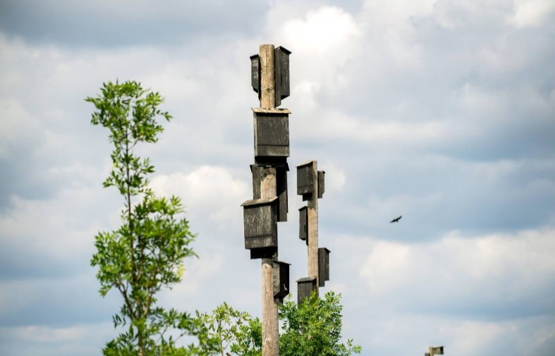 Vogels, zwaluwen en vleermuizen houden ongedierte bij de stal weg.