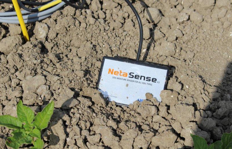 De bodemvochtsensor bepaalt de vochtbehoefte van de aardappelplantjes.