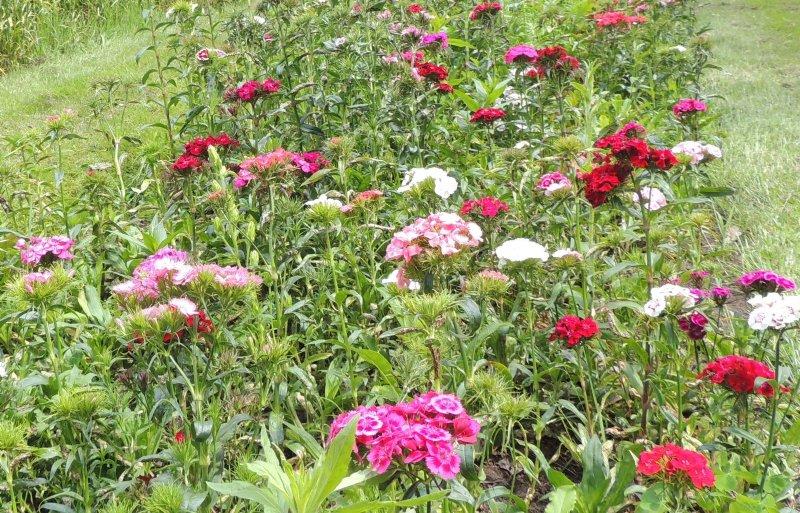 Bezoekers zijn overweldigd door de vele bloemen.