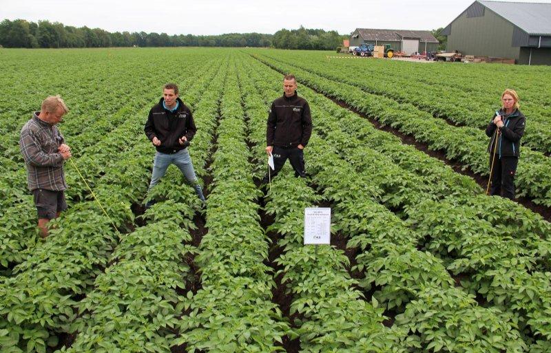 Bert Horsting (tweede van rechts) en Luuk Heling (tweede van links) geven uitleg bij mechanische onkruidbestrijding in aardappelen.