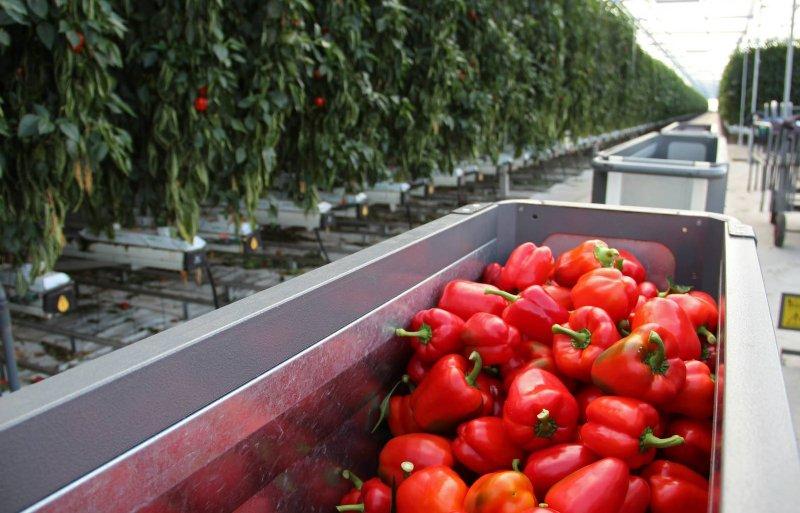 Internationale tuinbouw draait om samenwerking stelt Rabobank. Foto: Han Reindsen