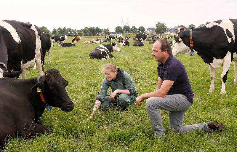 Harm Jansen melkt 150 koeien.