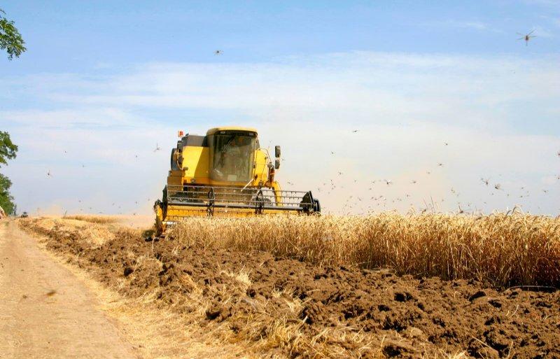 Sprinkhanen teisteren de toch al schrale oogst op deze tarwevelden in Ethiopië en het gehele Afrikaanse continent.
