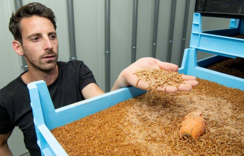 Als Rowin Batterink op volledige capaciteit draait, behoort hij tot de grootste meelwormenkwekers van het land.