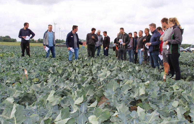 Onderzoeker Ruud Hoiting (derde van links) geeft uitleg bij de rassenproef in broccoli.