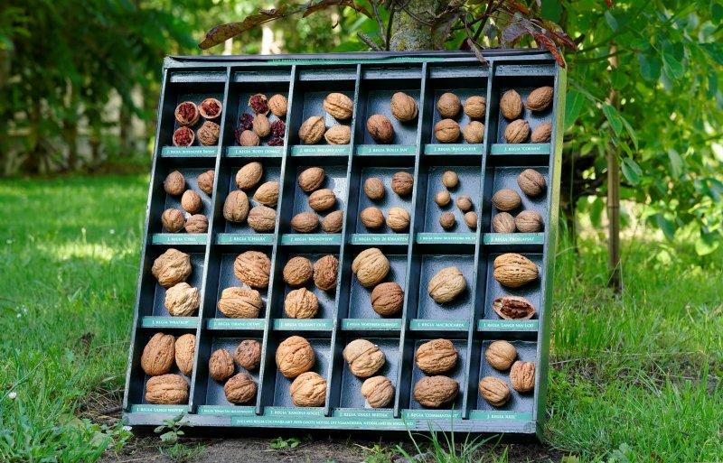 Een greep uit de 160 soorten walnoten van het bedrijf.