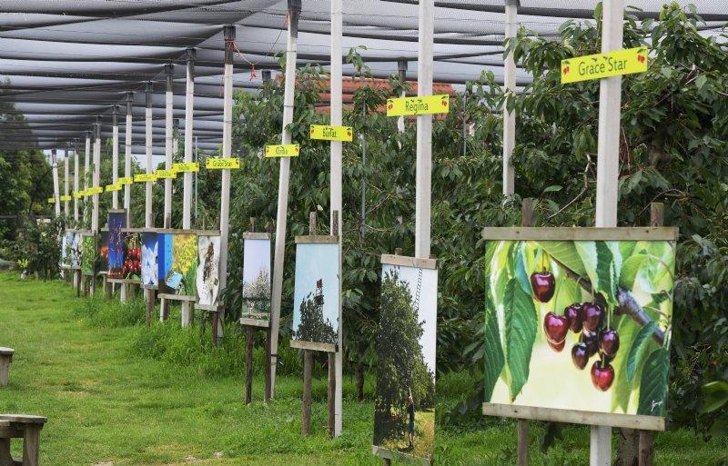 De zelfplukboomgaard met foto's van rassen en teelt.