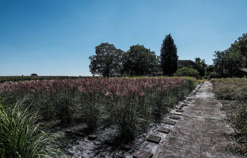 De kwekerij in Wehl meet circa 6.000 vierkante meter.