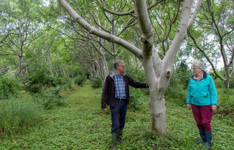 De walnotengaard is inmiddels helemaal volgroeid.