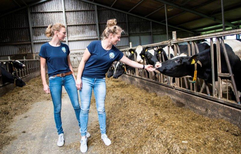 Het bedrijf telt 135 koeien.