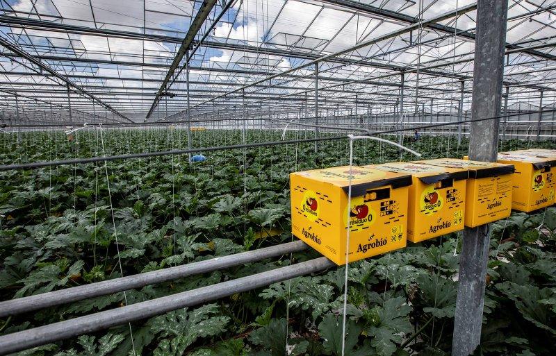 De kwekerij gebruikt voor de bestuiving hommels.