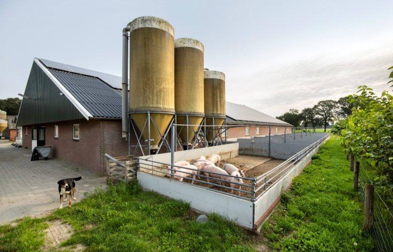Door de 210 zonnepanelen op het staldak voorziet het bedrijf in de eigen energiebehoefte.