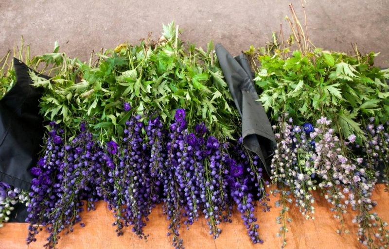 Snijbloemenoogst vindt van mei tot september plaats.