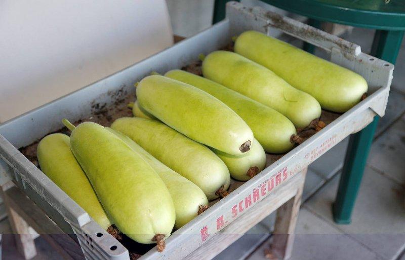 De vruchtgroente lauki is opgekweekt uit Indiase zaden.