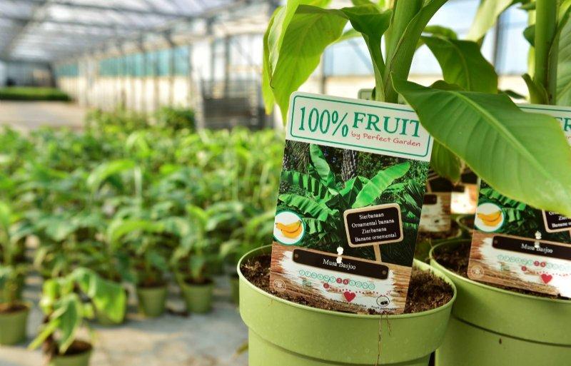 Met 100% Fruit kunnen consumenten eigen fruit kweken.