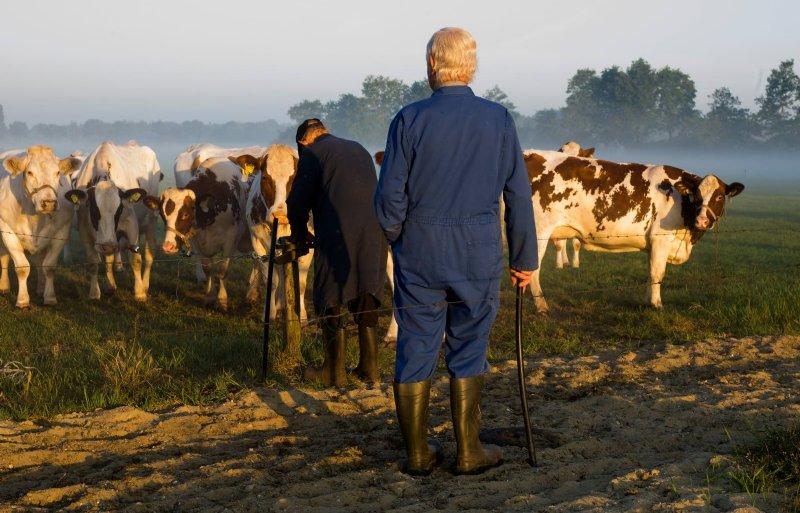 De gebroeders Somers kijken samen bij de koeien.