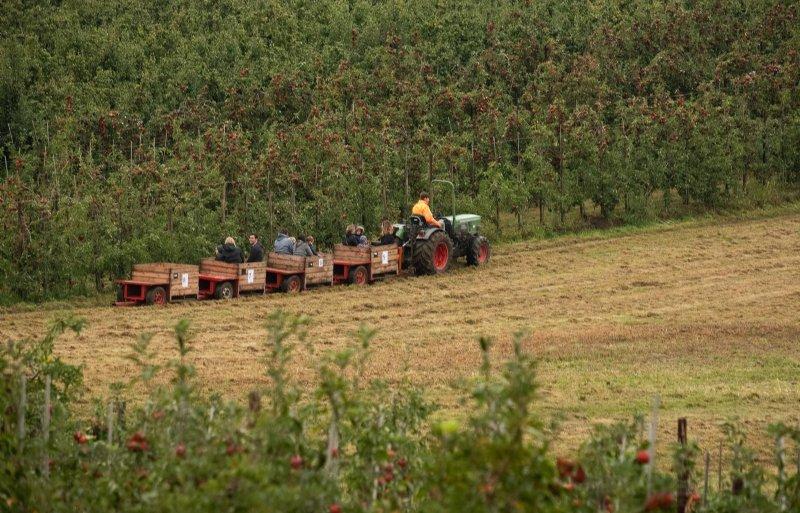 De pluktrein in het Zuid-Limburgse landschap.