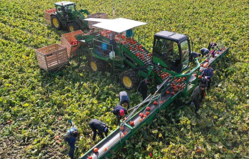 De oogstmachines zijn in Nieuw-Zeeland gebouwd.