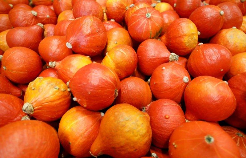 Van de pompoenen is 95 procent oranje gekleurd.