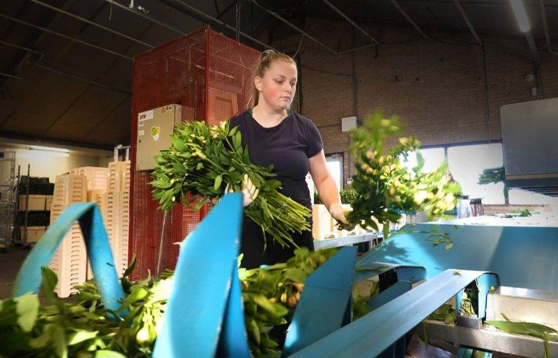 De kwekerij zet 36 miljoen stelen per jaar af.