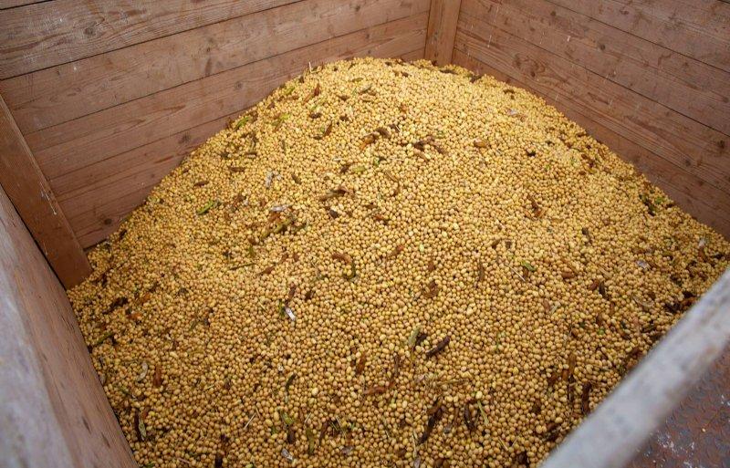 De oogst is goed voor 10.000 tot 15.000 liter sojadrink.