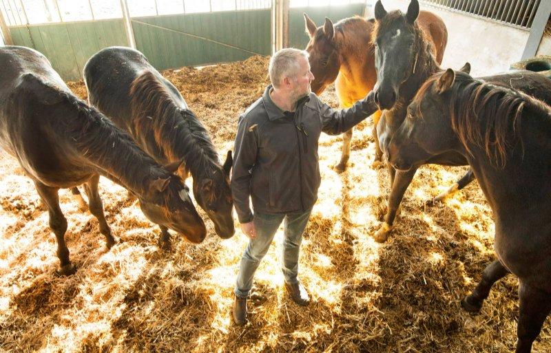 Durk de Jong heeft de paarden weer op stal.