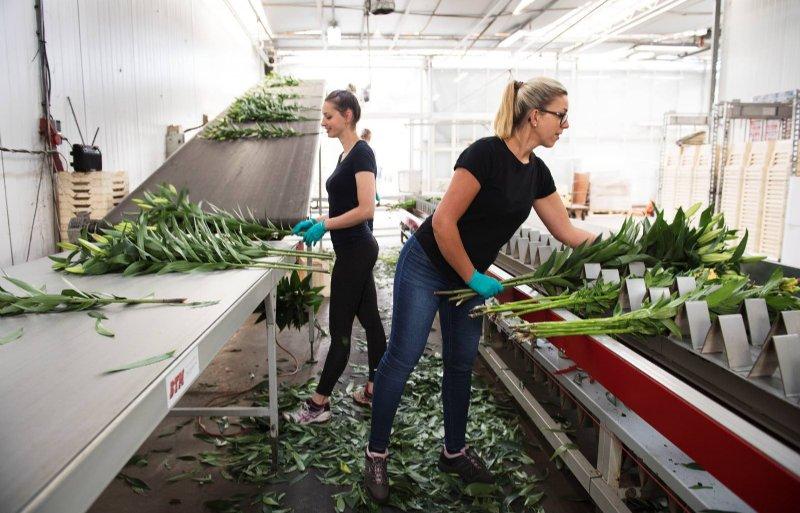 Als het gaat om investeringen, ziet de Rabobank een verschuiving van familiebedrijven naar investeerders van buiten de glastuinbouw. Foto: Rabobank