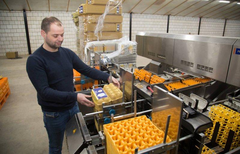 De eieren worden op het bedrijf gesorteerd en verpakt.
