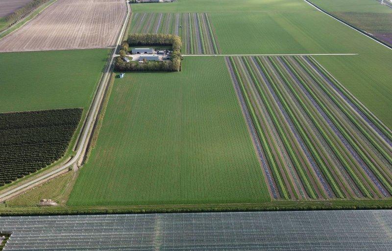 Cornelis Mosselman heeft 15 hectare in stroken.