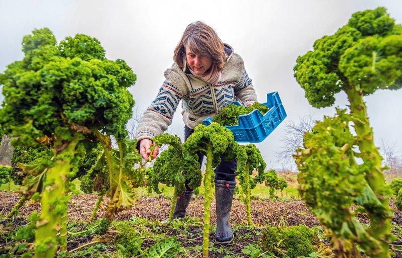 Bregje Hamelynck verbouwt meer dan vijftig verschillende groenten.