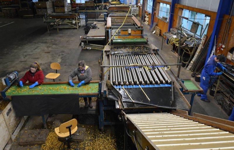 Op het bedrijf van ruim 300 hectare werken twaalf vaste medewerkers.