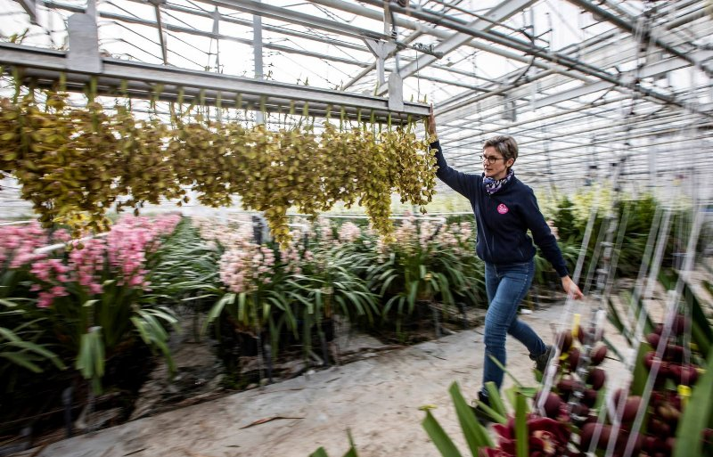 Sandra van der Helm vervoert bloemen door de kas: 'We zetten in op kwaliteit, betrouwbaarheid en mooie kleuren.'