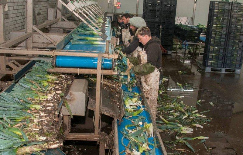 Maatschap Hop zet in het plant- en oogstseizoen werknemers uit Zuid-Europa in.
