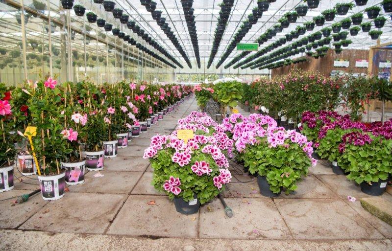 Particulieren mogen zelf hun planten uitzoeken.