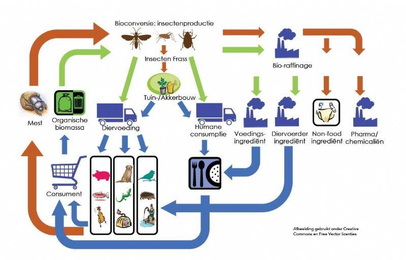 De circulaire visie van de insectensector.