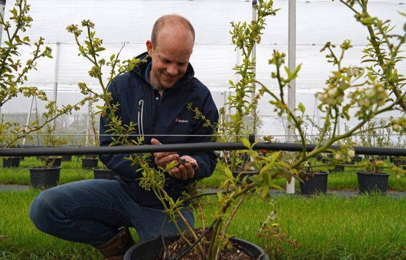 Rik Klein: 'We zien een toenemende vraag naar blauwebessenplanten.'