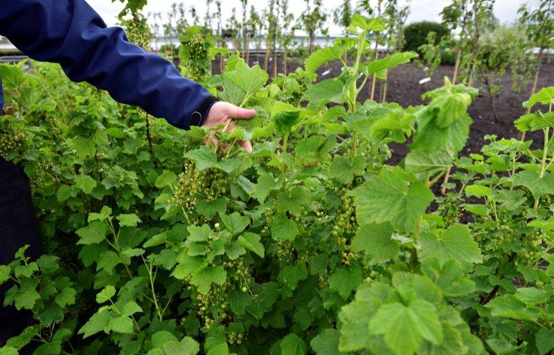 De handelskwekerij in Boskoop heeft nu meer klanten dan planten.