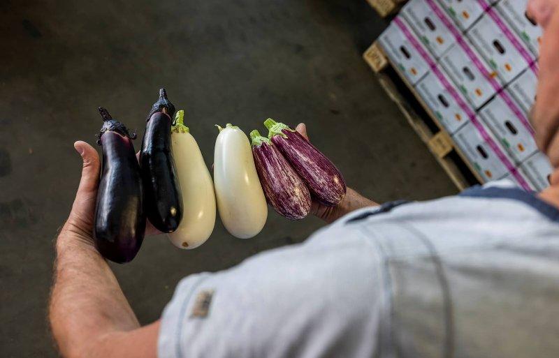 Opbrengsten gekleurde aubergines verschillen.