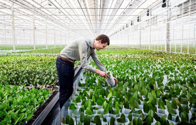Koen van Koppen van Orchideeënkwekerij Stolk Flora in Bleijswijk