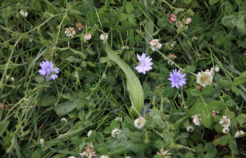 Het grasland bestaat uit verschillende kruiden.
