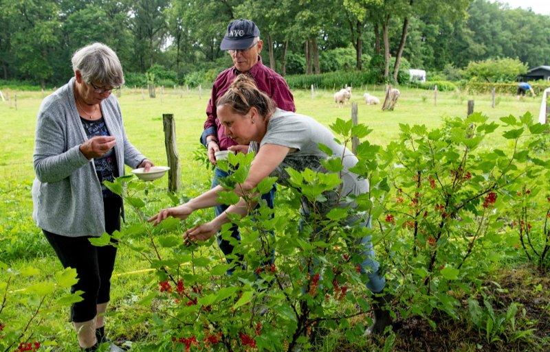 De pluktuin en het voedselbos van Martijn en Linda Hulsman zijn nog volop in ontwikkeling.