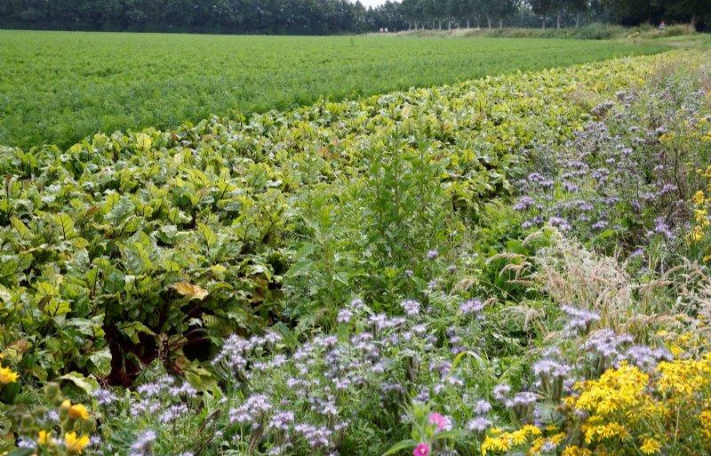 Bij biocyclische veganlandbouw gaat het om dierlijke mest uitbannen, cyclisch werken en biodiversiteit bevorderen.