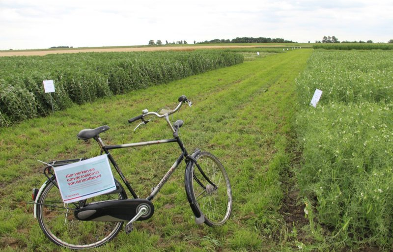 Op vier noordelijke proefboerderijen staan proefvelden met eiwitgewassen.