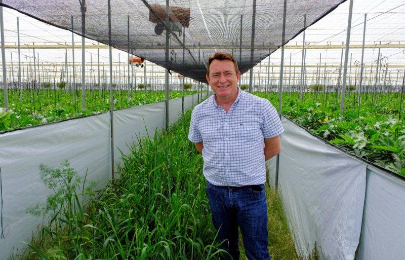 Biologische courgette- en komkommerteler José Manuel Escobar uit het Spaanse Almeria.