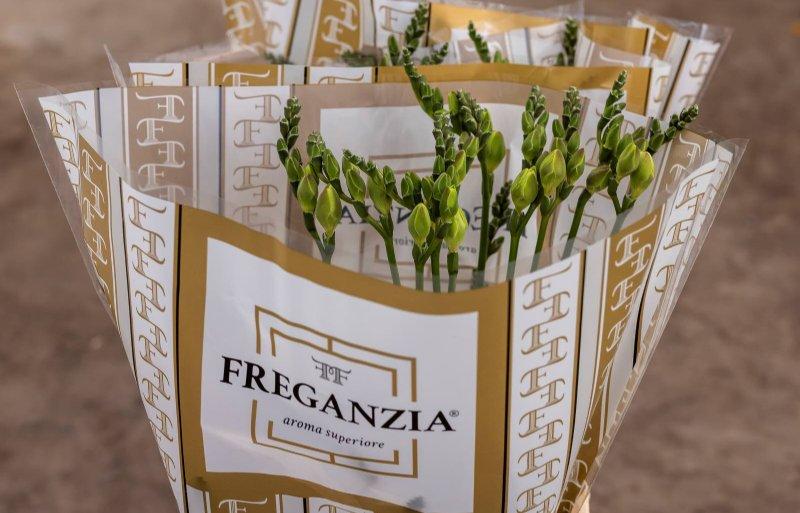 Freganzia heeft een lange steel en veel knoppen.
