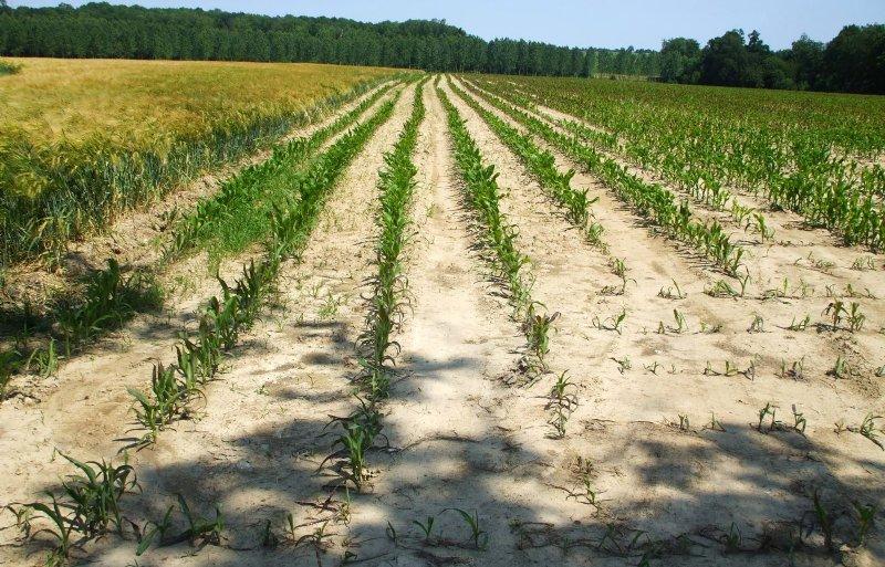 Lange periodes van droogte geven Franse boeren kopzorgen over hoe hun toekomst eruitziet.