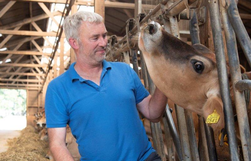 Jerseys hebben een goed karakter, zijn fijn om mee te werken en passen in onze stal', vindt Henk van Gelder.