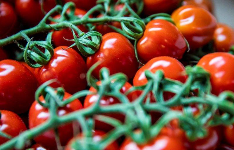 Met een tweedehands verpakkingslijn kan de Roemeense teler Adrian Lupean zijn tomaten in karton verpakken.
