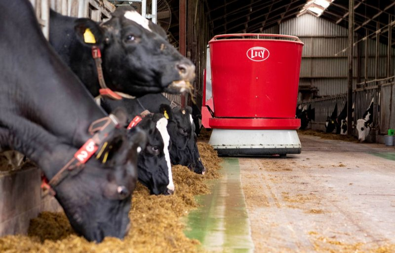De familie Lubbersen melkt gemiddeld 11.000 kilo per koe.